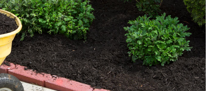 mulched and pruned bushes in landscaped flowerbed indiana