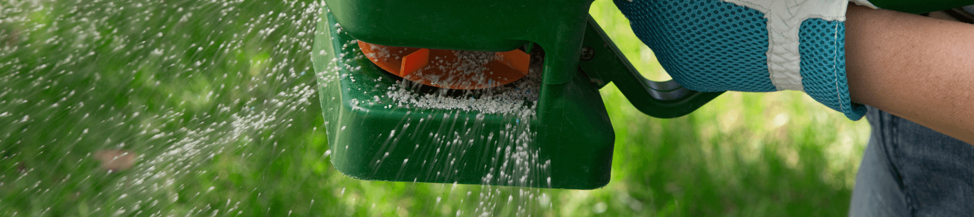 spreading tiny grass seeds from green spreader