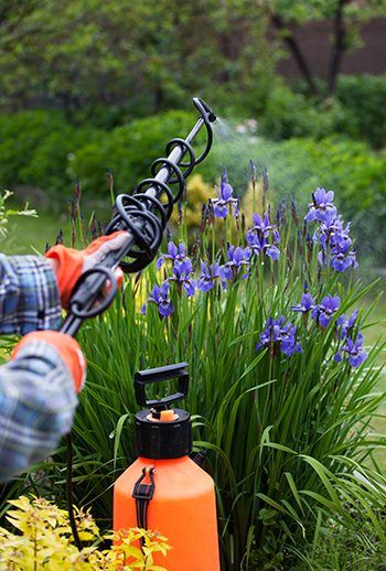 pest control and mosquito spraying purple plants