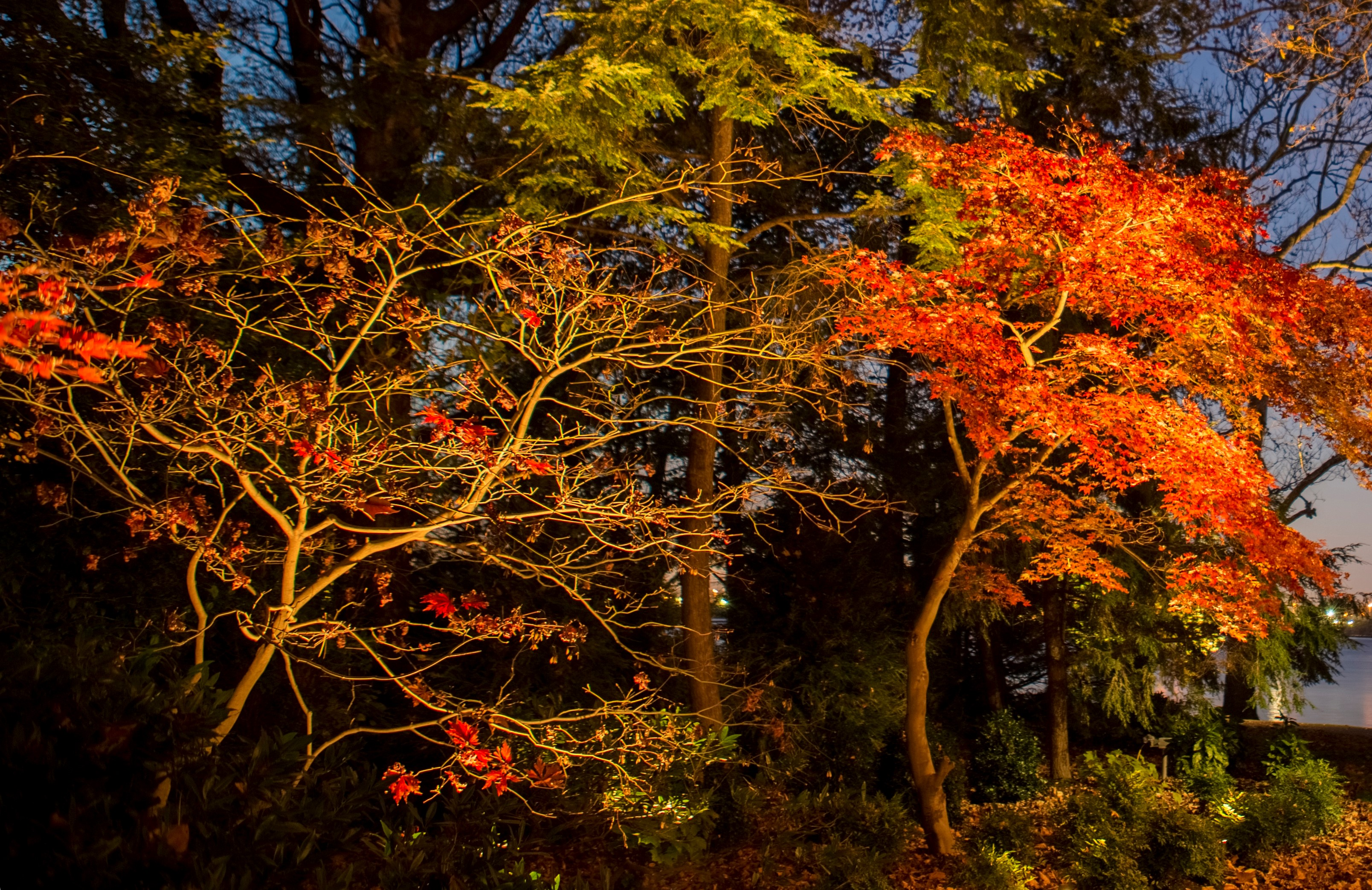 underlit trees landscape lighting