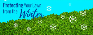 protect your lawn from winter